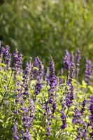 The smell of lavendar helps you relax and could lead to a better night's rest.