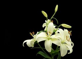 Flowers like lilies are appropriate for funerals.