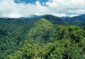 The Nilgiri Mountains of India are home to an abundance of medicinal plants.