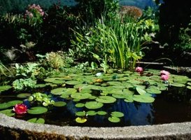 Clean garden ponds  regularly to remove sediment.