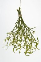 Hang your flowers and allow them to air dry, preserving them for years to come.