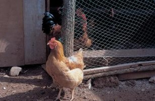 Poultry netting allows for unobstructed viewing.