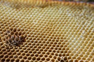 Honeycomb is either a sweet treat or a nuisance to homeowners.