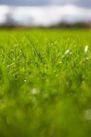Spring is not the best time to fertilize a lawn.