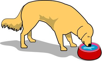 Bending over to reach a bowl can be hard on a dog's joints and muscles.