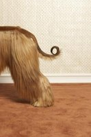 Dog waste on carpet can make homes smell unpleasant.