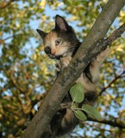 Cats love climbing trees, so you can make an indoor tree out of a real tree.