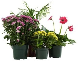 Protect your flower pots from pests.