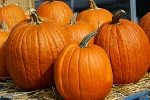 Pumpkins are the close kin of zucchini, gourd and squash.