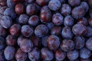 A single seed can potentially produce hundreds of plums.