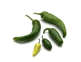 Jalapenos come in a variety of heat levels to make your powder as spicy as you wish.