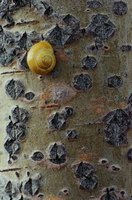 Snails have an average lifespan of around five years if kept correctly.