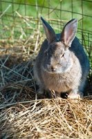 Rabbit droppings have a very high nitrogen content.