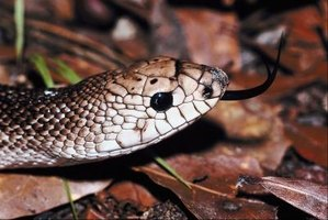 Most snakes are harmless, but do not try to remove a strange snake species.