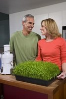 Adding wheatgrass to your diet is a great start to a healthier life.