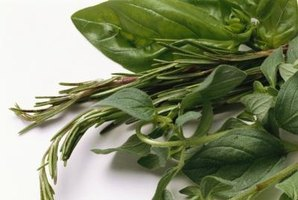 Blanch basil for freezing or before making pesto.