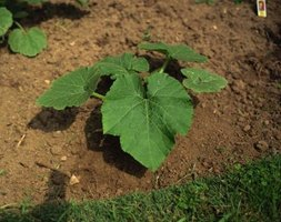 Soil tests provide information on what your garden will need before planting.