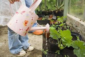 Choose the greenhouse flooring material that best suits your needs.