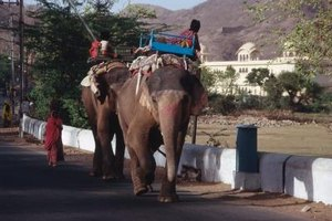 In some countries, elephants are a prestigious form of transportation.