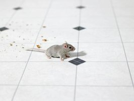 Avoid using mice poisons that allow mice to die in the walls, floor or ceilings of your home.