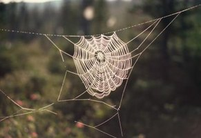 The pattern of a web helps to identify a spider.