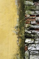 Moss stains brick walls and make them look neglected.