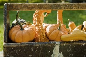 Many varieties of gourd can be eaten if harvested when very young.