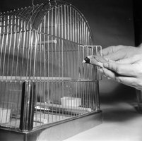 Finches make great pets that can learn to interact with you.