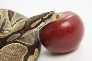 A snake and an apple represent original sin.