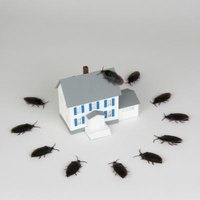 Insect infestation can spread from home to home.