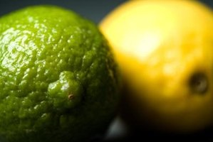 Lemons and limes possess the highest citric acid concentrations of any food.