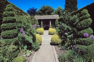 Use arborvitaes to line a driveway or entrance.