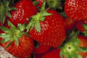 Strawberry plants can suffer from nematode infections, which create yellow leaves on the plant.