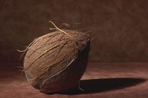 The brown, fibrous outer shell of the coconut contains phosphorus and potassium.