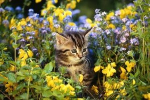 Even the cutest cats can make a mess of your garden.