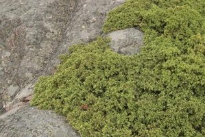 Moss covers rocks in bright green hues.