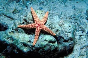 Starfish generally live for five to ten years.