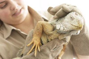 Caring for your pet reptile includes providing it a stimulating environment.