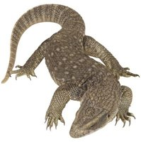 A lizard's body is naturally curvy in shape.