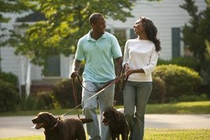 Providing your dog with regular walks shows you are a responsible dog owner.