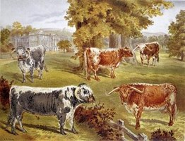A painting of cattle can be realistic or whimsical depending on what the artist is trying to convey.