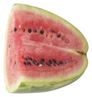 Many watermelons with red flesh take about 80 days to germinate.