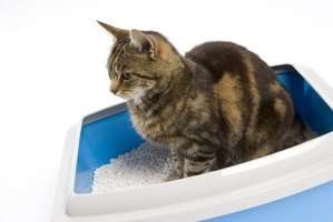 Cat litter should never be flushed down a toilet.