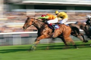 Many horse races occur on turf instead of dirt.