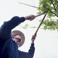 Pruning is a routine garden chore.