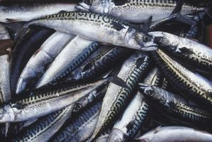 Fresh mackerel can be filleted and cooked quickly for a delicious meal.