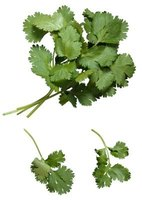 Cilantro has a bright, fresh, distinctive flavor.
