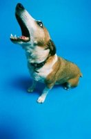 An ultrasonic sound device can train a dog to stop barking.