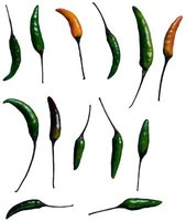 Thai peppers come in a variety of sizes and types, but all are some of the hottest peppers grown.
