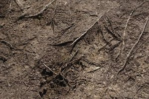 Overworked soil becomes drained of the NPK nutrients.